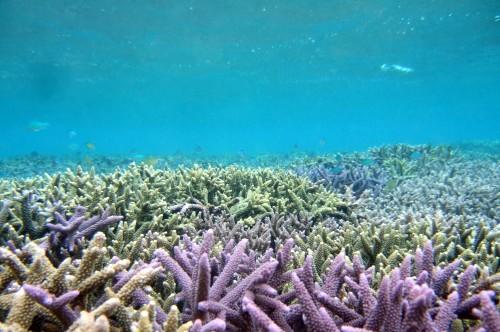 カラフルサンゴに埋め尽くされた沖縄の海