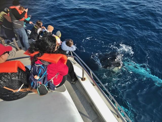 目と鼻の先に見えるザトウクジラ